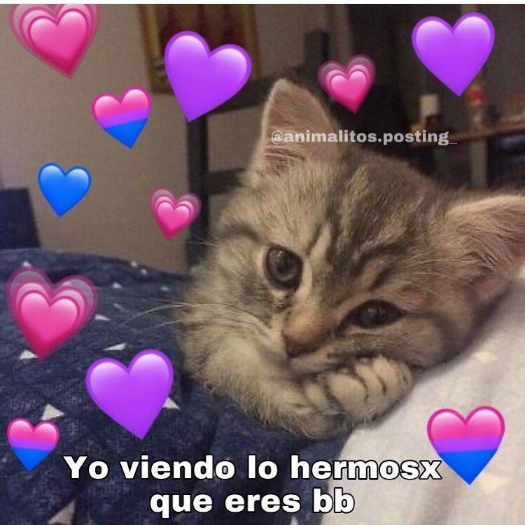 3 693 Me Gusta 62 Comentarios Gatitos Con Frases El Michi En Instagram Gato Gatosdeinstagram Instagato Memeg Memes Instagram Frases