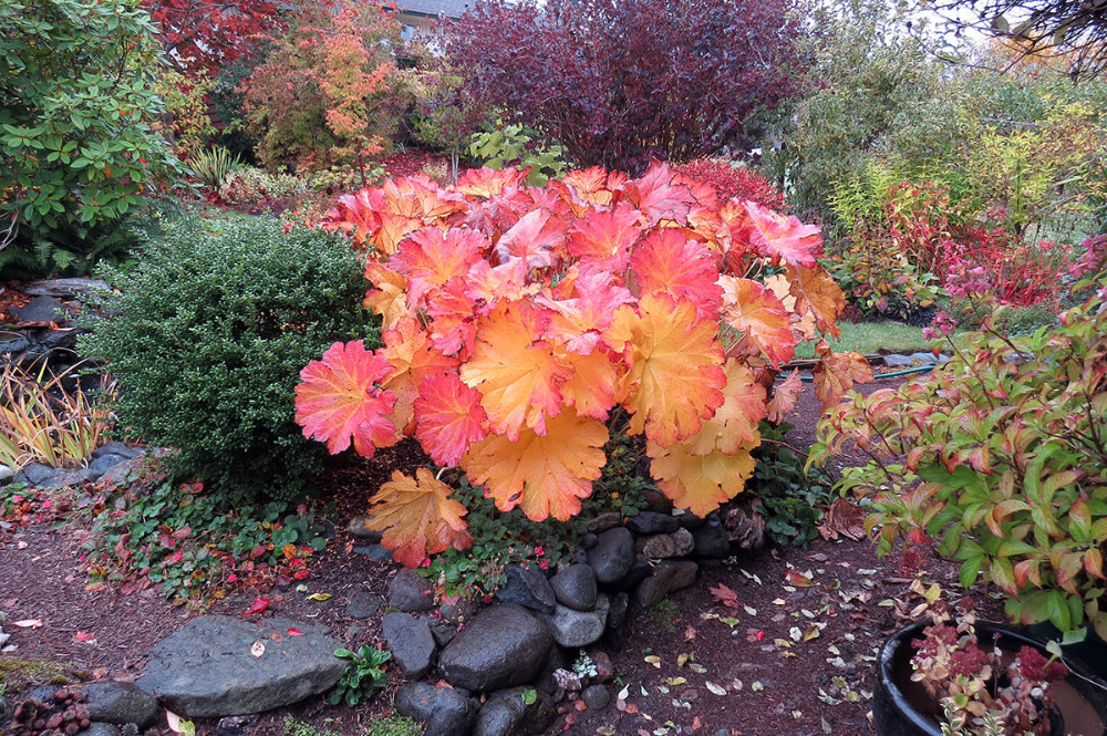 Duchess Of Dirt Autumn Brings Out The Best Of Colours Comox Valley Record In 2020 Plants Comox Garden