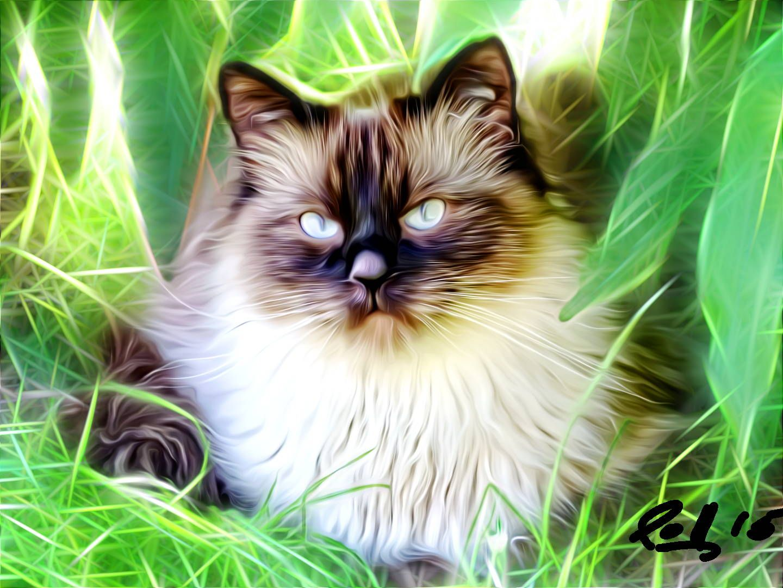 Im Gedenken an meine verstorbene Katze. An ihrem