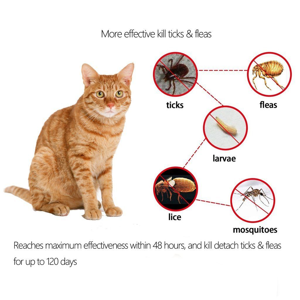 Salute Flea And Tick Collar For Cat And Kitten 4 Month Protection Adjustable One Size Fits All Water Resistant 15 You Can Get Cat Fleas Flea And Tick Fleas