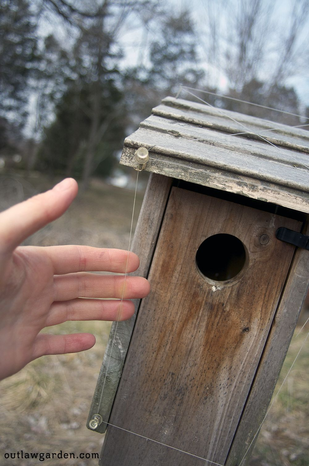 DIY: Easy house sparrow deterrent | for the birds | House ... Bird House Designs For Cool Sparrows on sparrow computer designs, sparrow art designs, sparrow control,
