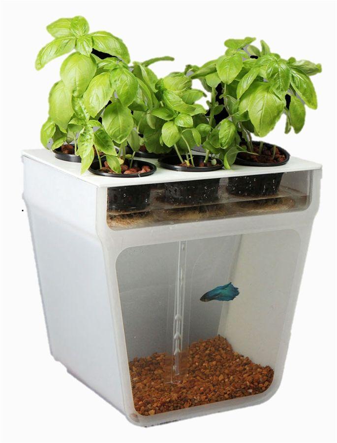 Home Aquaponics Garden Preorder Now For 20 Off Free Shipping Aquaponic Gardening Fish Tank Garden Aquaponics