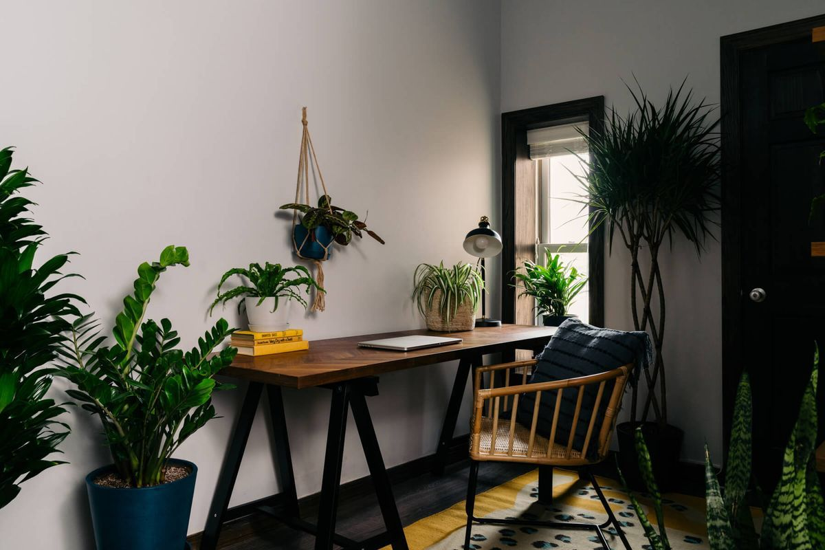 These 8 Plants Will Survive In Any Office Environment In 2020