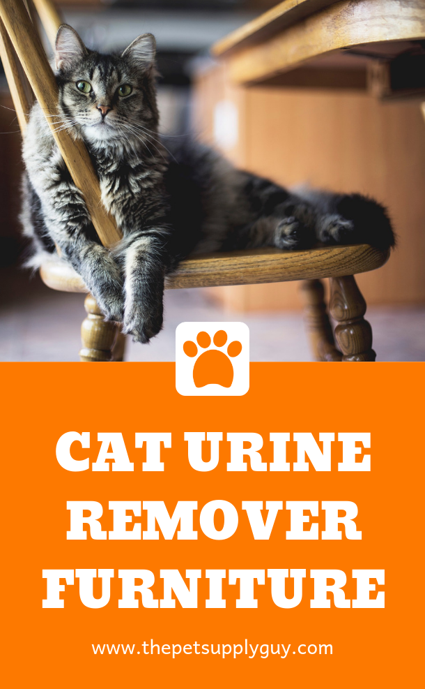 How to Get Cat Urine Out of Wood Furniture | Cat urine ...