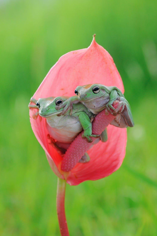 Pin de Shannon Sunseri en Too Cute!   Pinterest   Ranas, Animales y ...