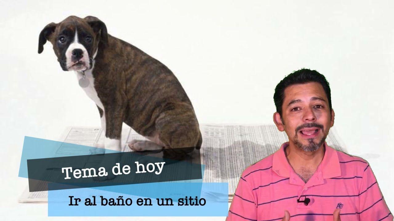Ir Al Baño En Un Solo Sitio Cómo Enseño A Mi Perro A Que Vaya Al Baño Repelente Para Perros Perros Remedios Caseros Para Perros