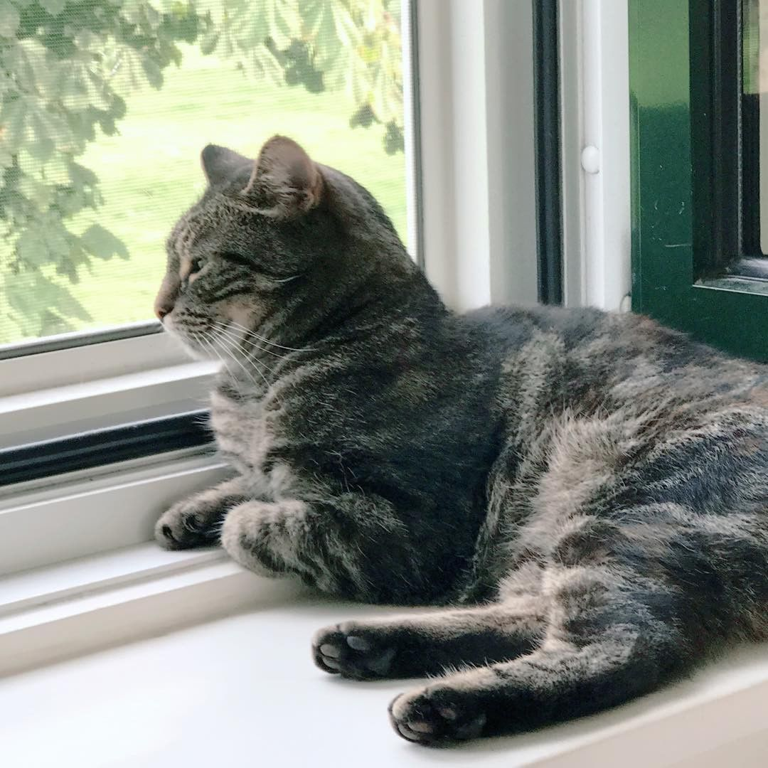 Window bed for cats  window seat is the best place          cat cats kylie