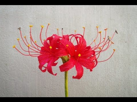 Abc Tv How To Make Red Spider Lily Paper Flowers From Crepe Paper