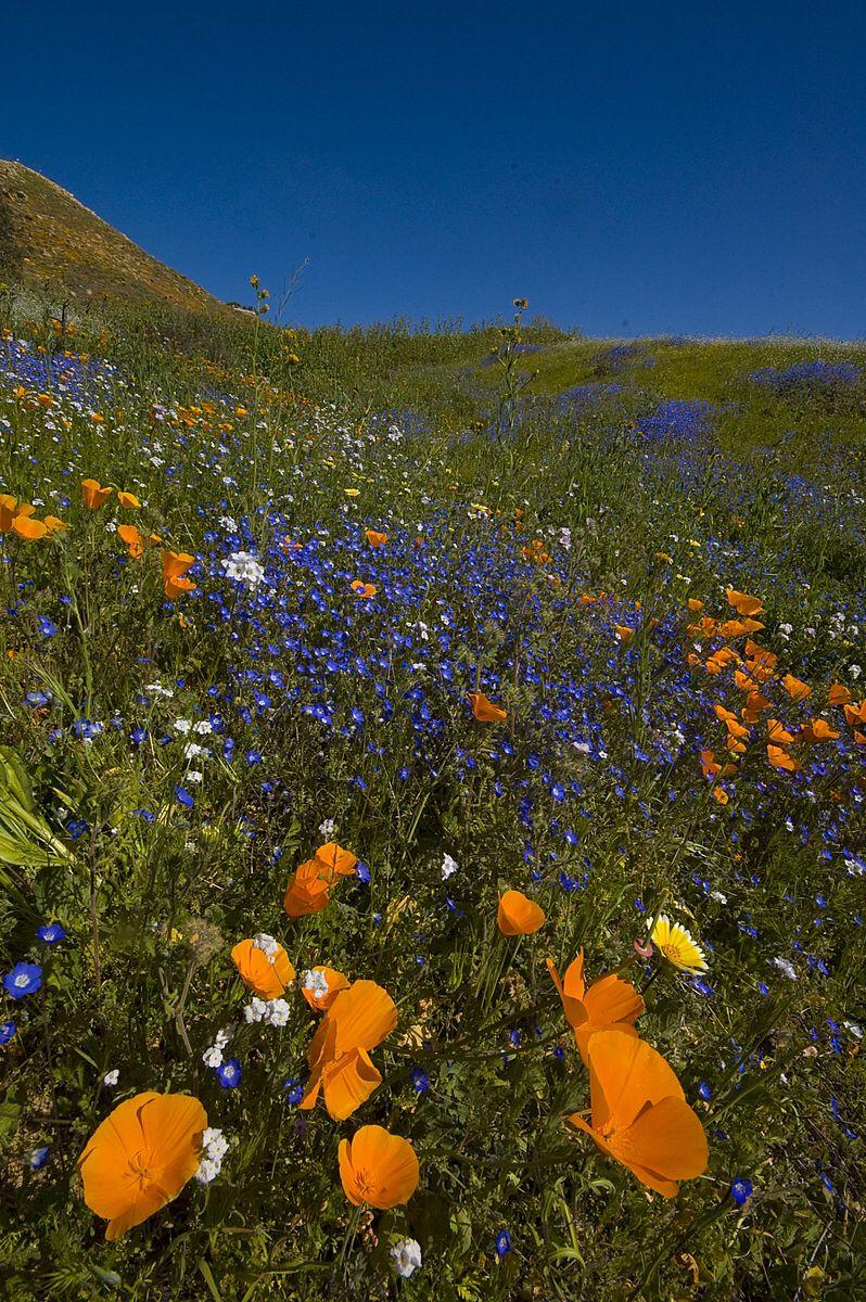 Httpenpediawikifilelakeelsinorewildflowersg