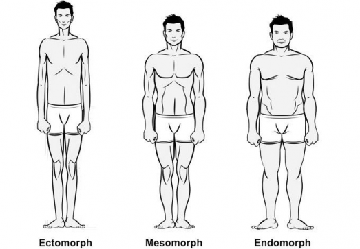 Workouts and Diet Plans for Ectomorph Mesomorph and