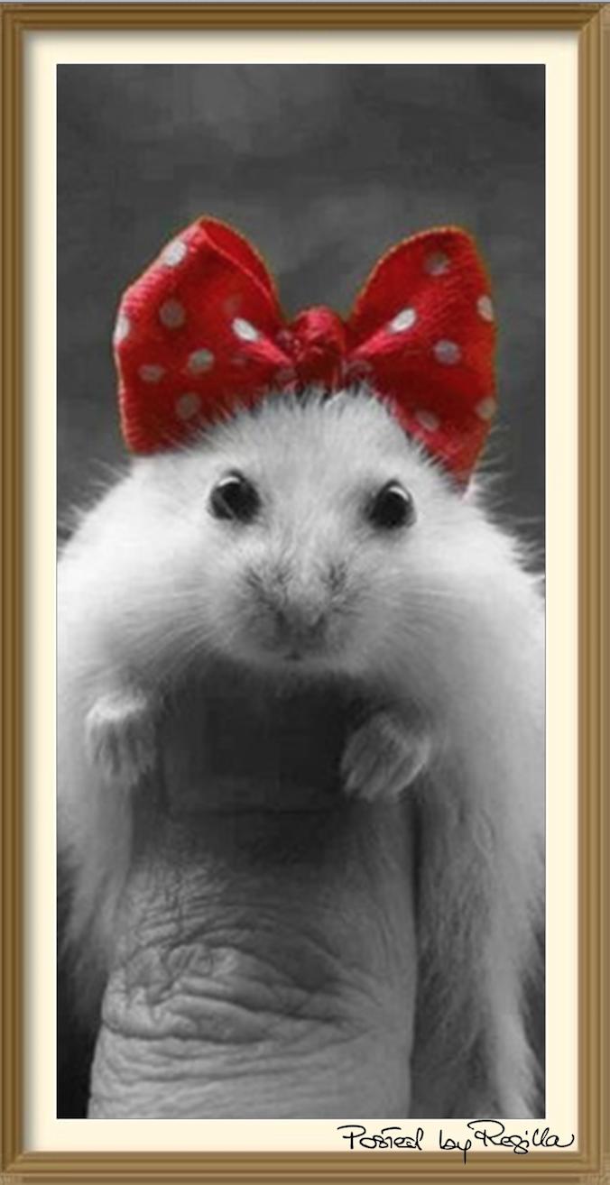 Regilla I M I Cute Or What Cute Hamsters Cute Animals Cute