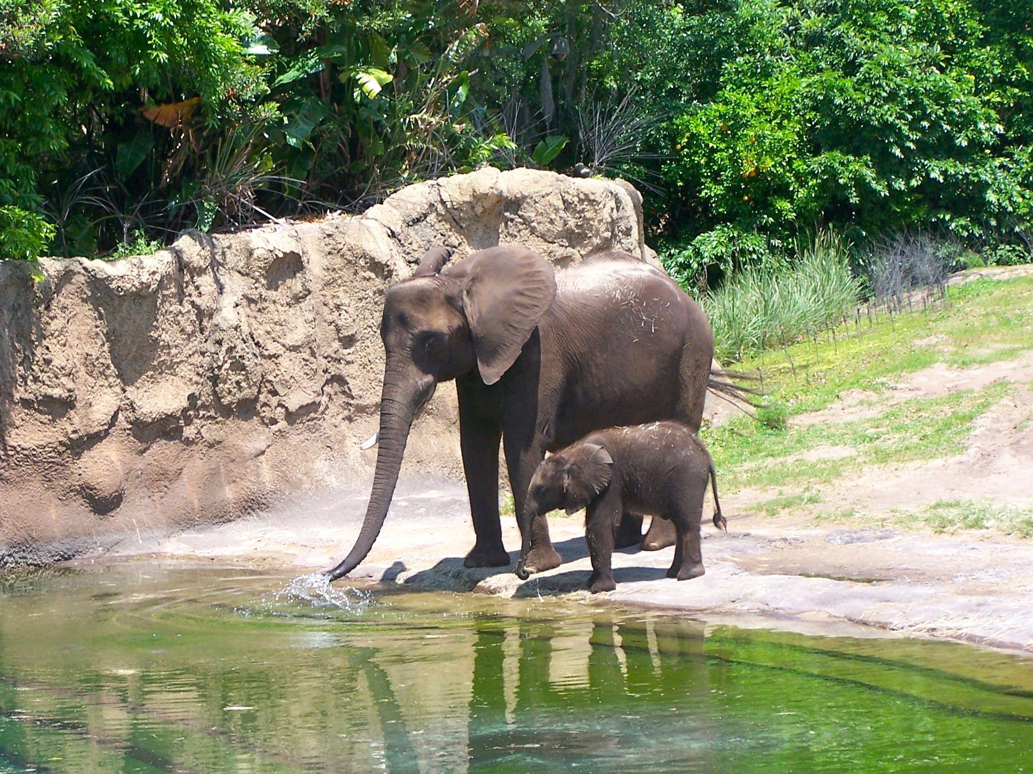 Motherly L VE Rainforest animals, Animals, Rainforest