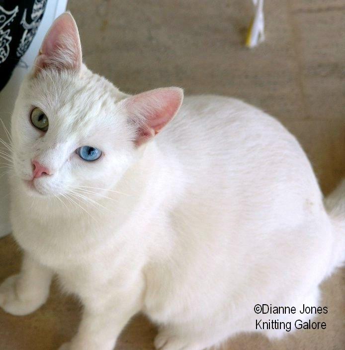 One Eye Blue One Eye Green Turkish Van Cats Turkish Van Pretty Cats