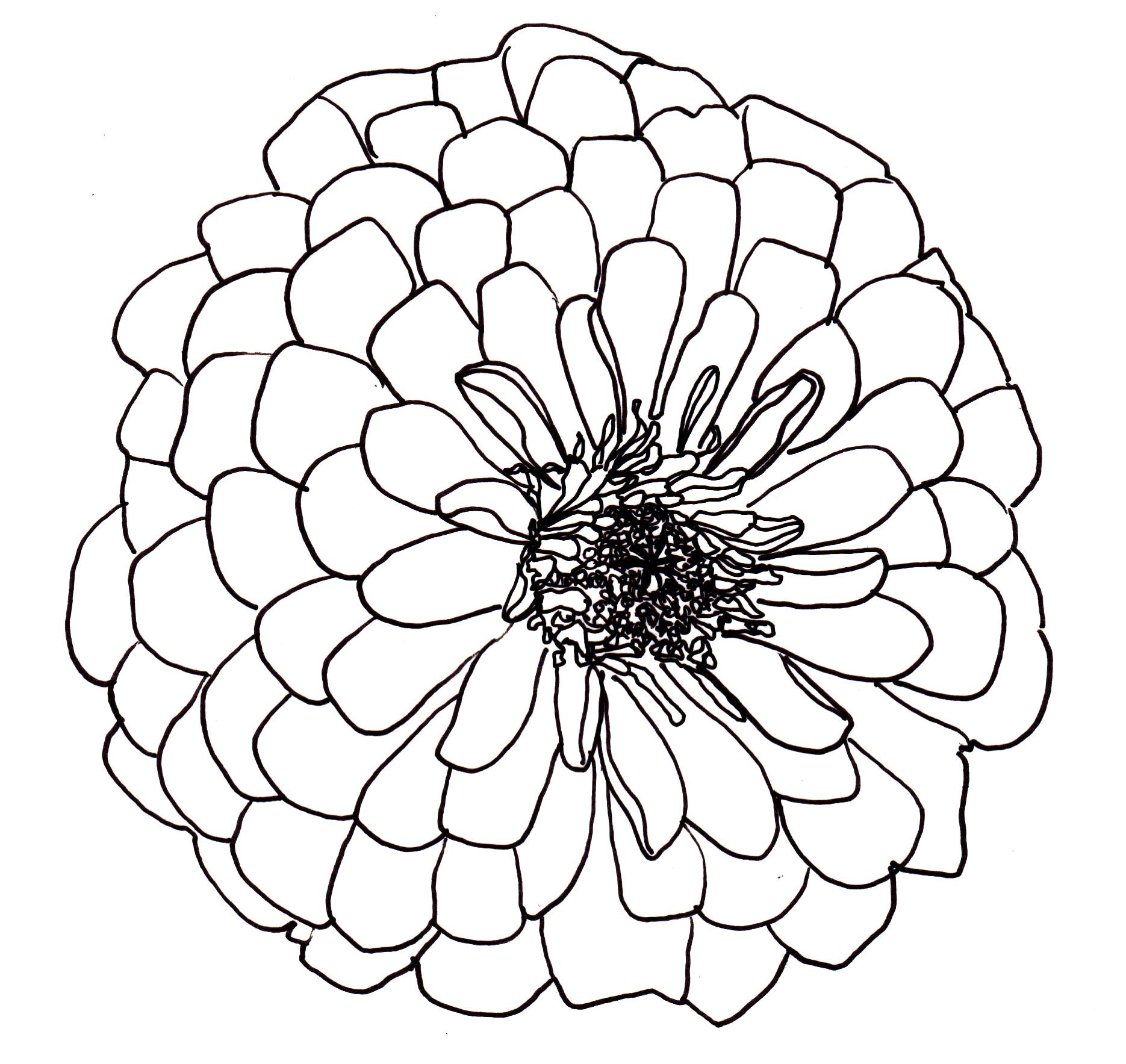 Line Art Flower Drawing : Line drawing flowers dahlia drawings pinterest
