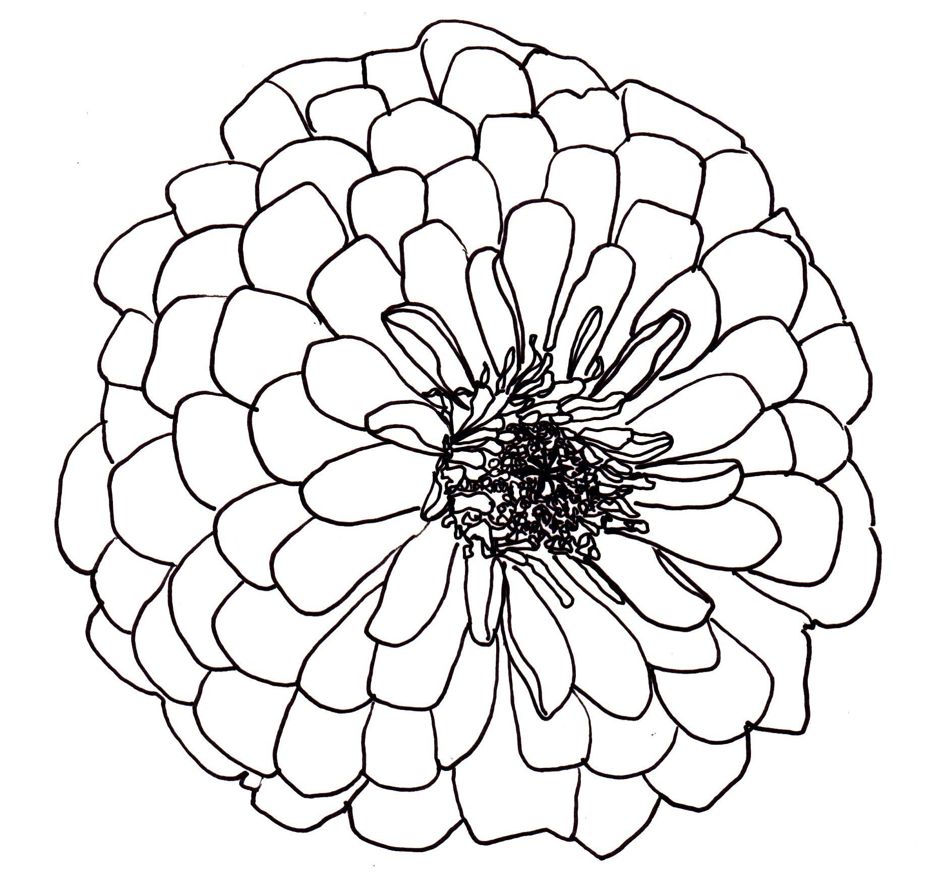 Line Drawing Flowers Dahlia Drawings Pinterest Dahlia