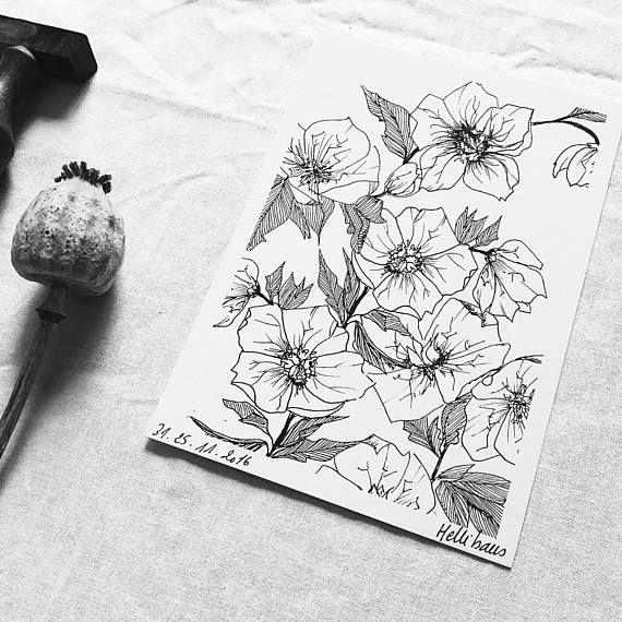 Hélléborus Carte postale illustrée Dessin à la main | Dessin main, Carte postale, Dessin