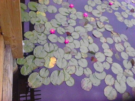 Beautiful lillies!