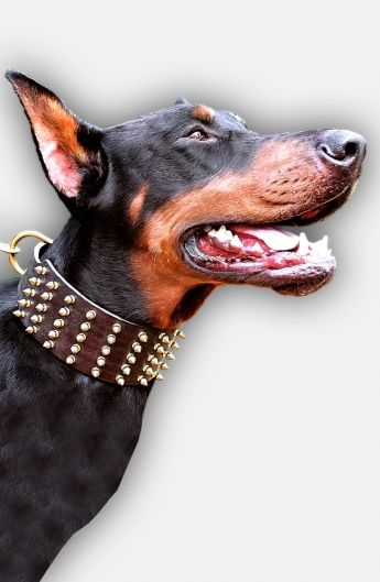 3 Inch Extra Wide Leather Doberman Collar With Hand Set Brass
