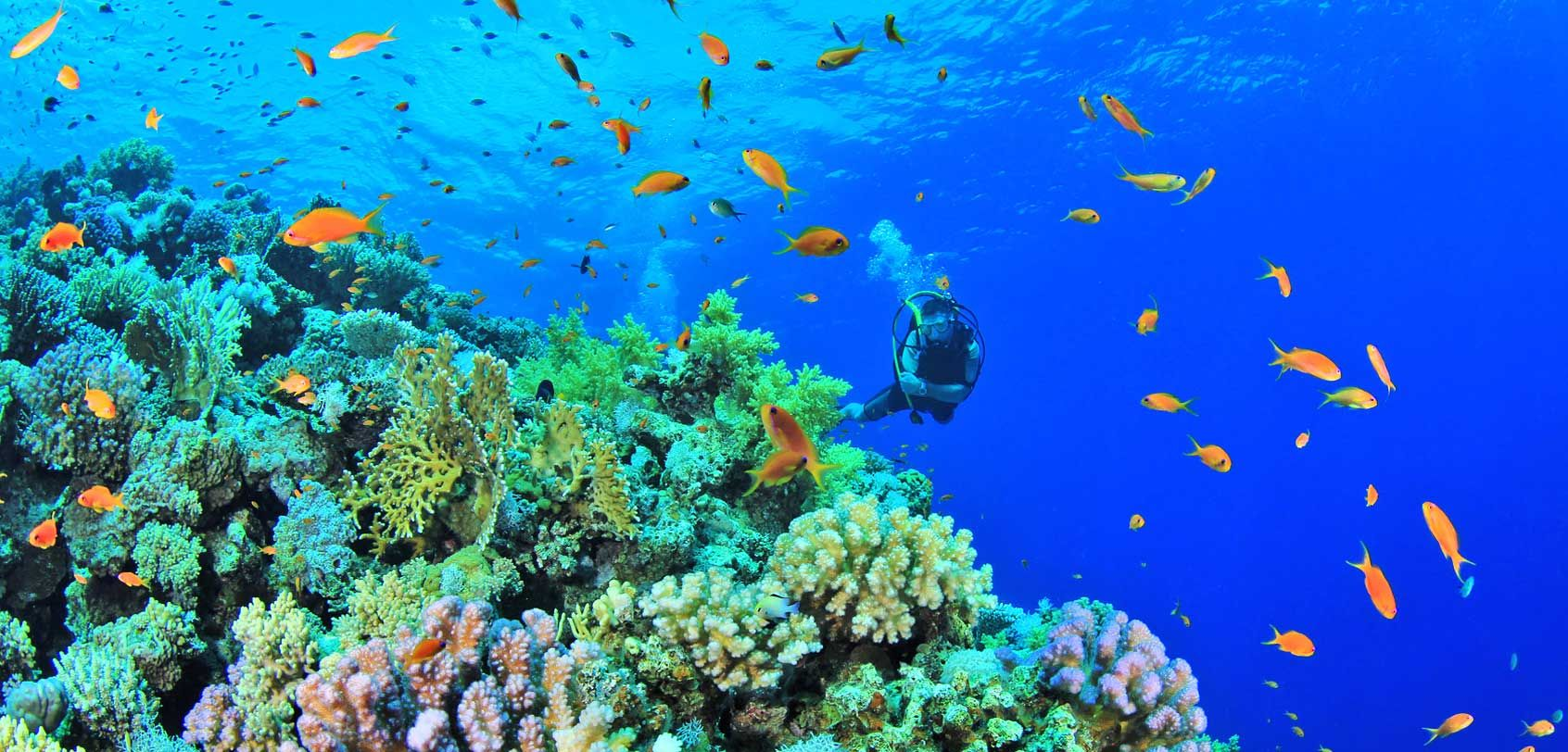 Diving In Anilao Batangas Of The Philippines A First Timer S Guide