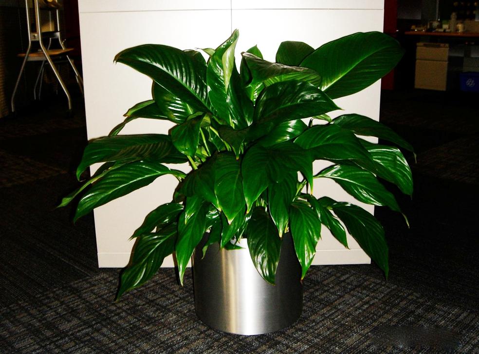 Free Plant Identification Plants, Tropical plants, Plant