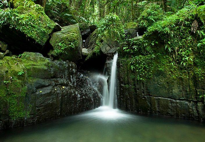 puerto rico el yunque | El Yunque Rainforest, Puerto Rico | Caribbean Vacation Guide