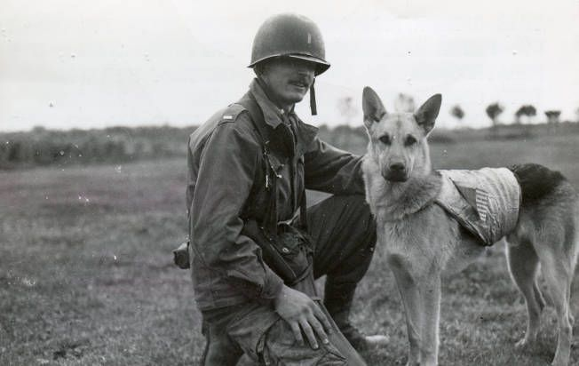 Military Dogs World War 2 Pictures Of