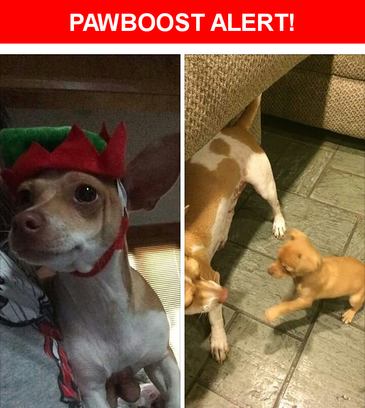 Please spread the word! Charlie Rendon was last seen in Lubbock, TX 79413.  Description: Neutered and chipped  Nearest Address: 43rd and indiana
