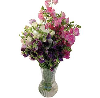 Fresh Cut Pink Sweet Pea Flowers Are Gorgeous For Weddings Whole Seasonal And Make Beautiful Wedding Bouquets