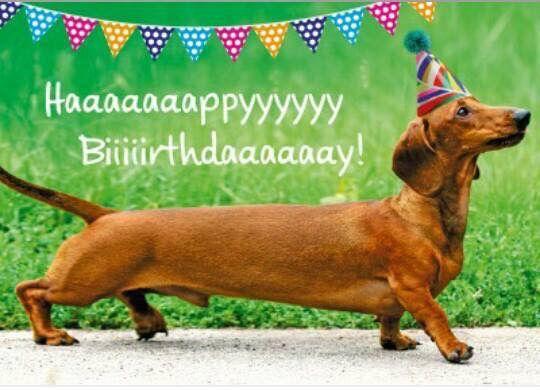 Pin Von Ralf Hoffmann Auf Geburtstage Gluckliche Hunde Hunde