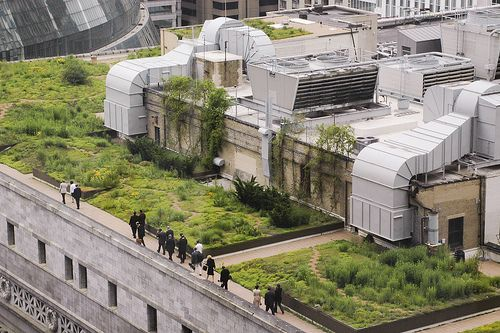 Chicago City Hall Green Roof Google Search Sustainable Living Pinterest Green Roofs