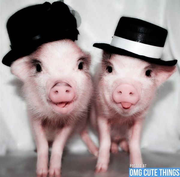 6b0bcba42af Piggies sticking there cute little tongues and in top hats