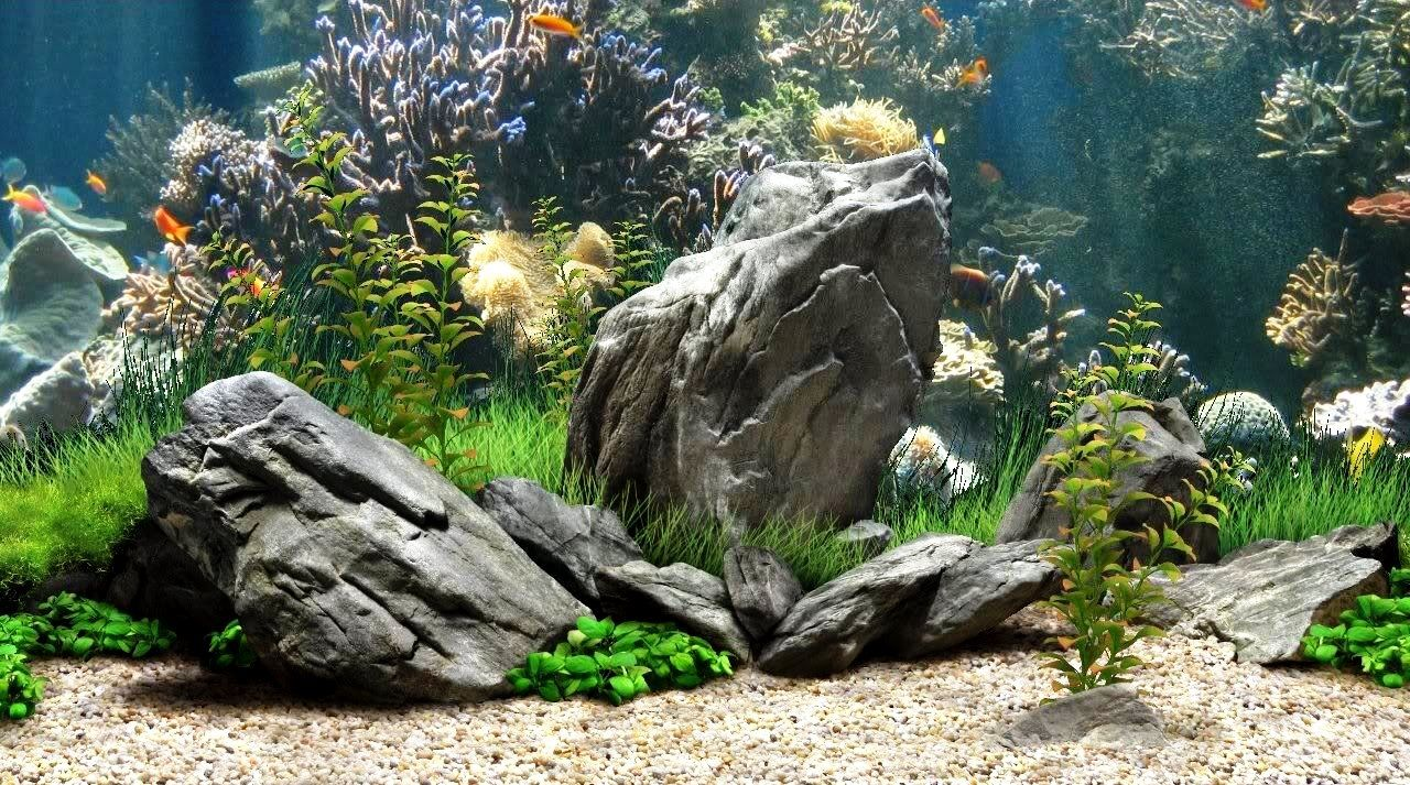 graphic relating to Aquarium Backgrounds Printable known as Fresh interesting aquarium backgrounds - Great Aquarium Backgrounds