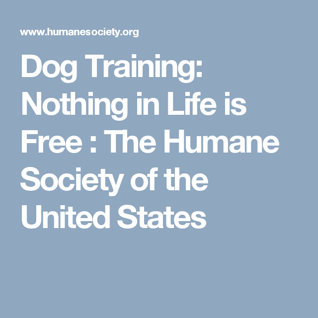 Dog Training Nothing In Life Is Free The Humane Society Of The