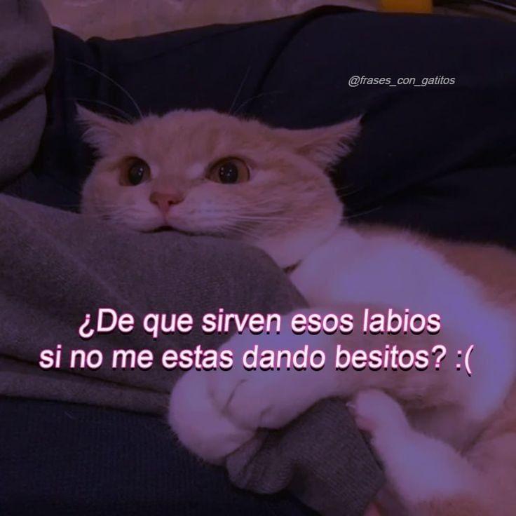 Pin De Mari Morales En Amor Memes Lindos Frases Gatos Memes Romanticos