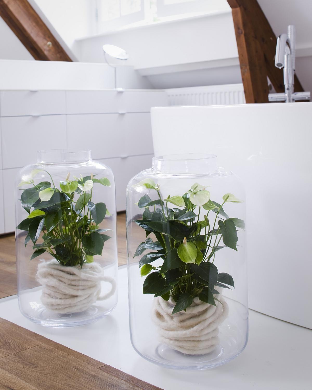 Potanthuriums in een tijdloos interieur. Op de hoogte blijven van verzorgingtips, leuke inspiratie en weetjes over potanthurium. Volg: Anthuriuminfo