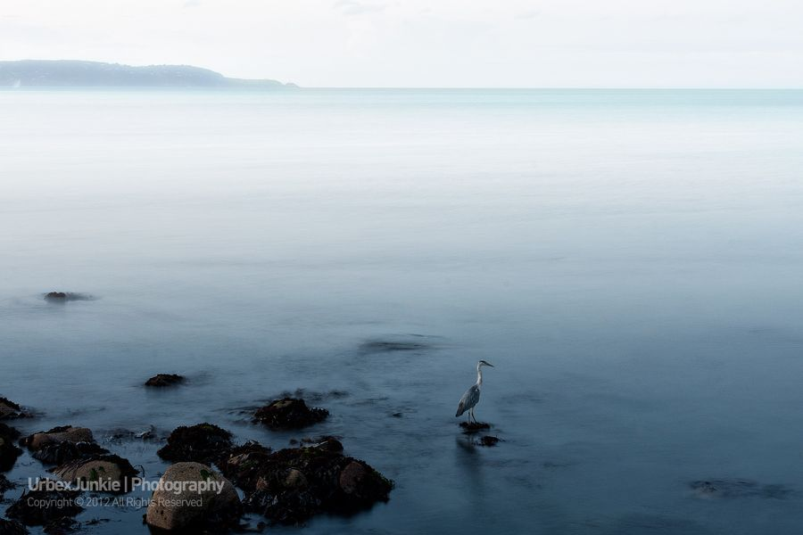 A beautiful Heron takes a rest on the coast of Dublin Bay.    I took this image on the way out of an old abandoned water park which I visited last night and figured it would make a great capture.