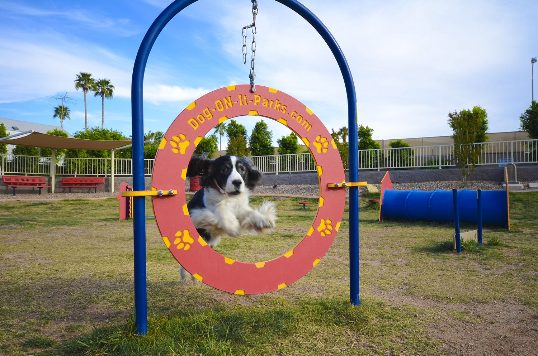 Complete dog park agility system dog