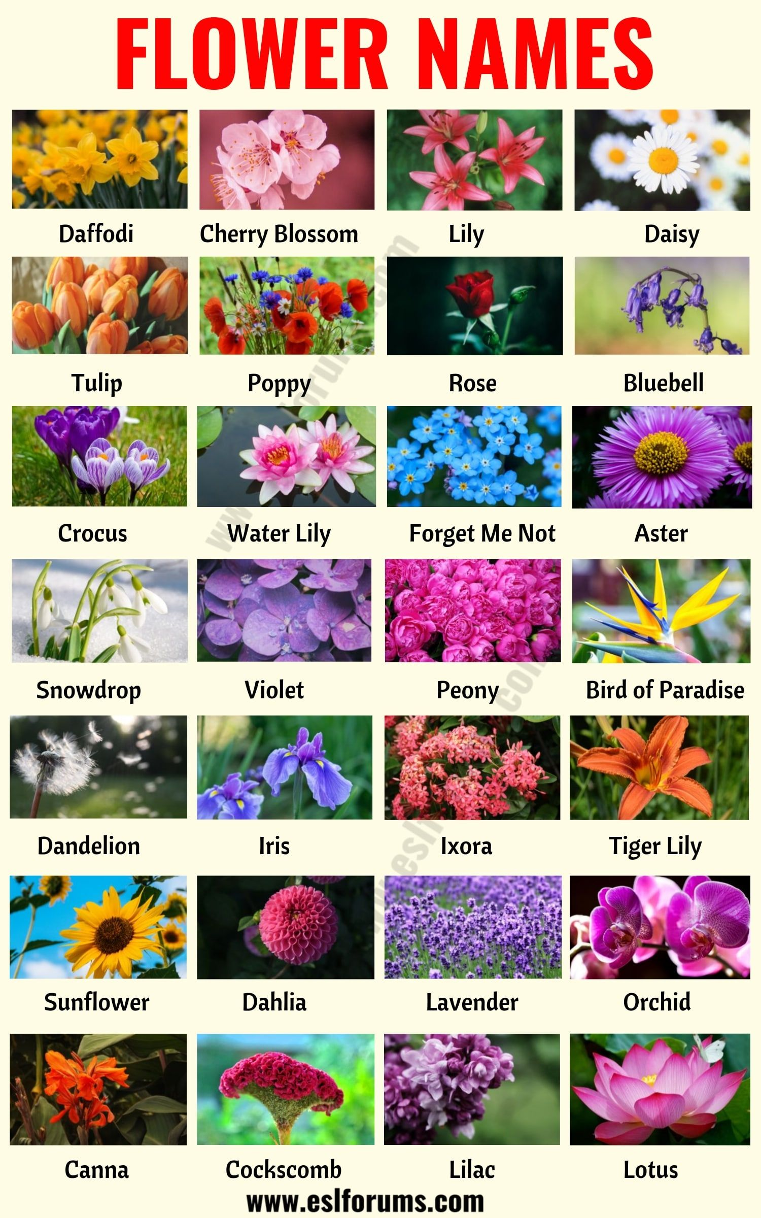 Flower Names List Of 25 Popular Types Of Flowers With The Pictures Esl Forums Infographic Flower Names Types Of Flowers Flowers