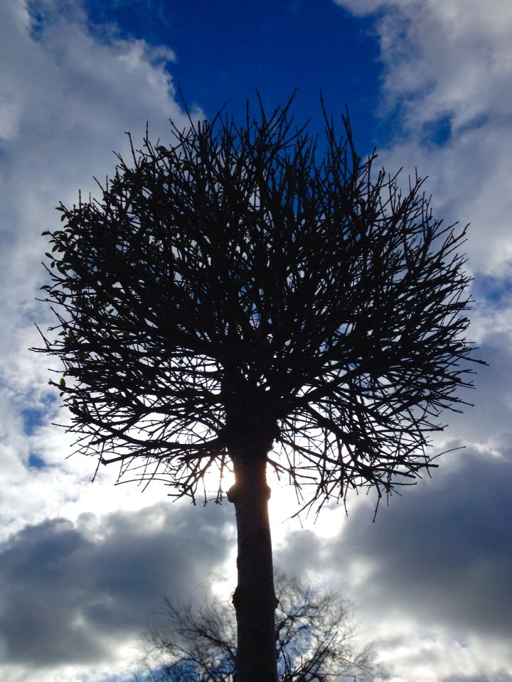 ~Libby Evans~ Pinterest~ sky! Tree sun