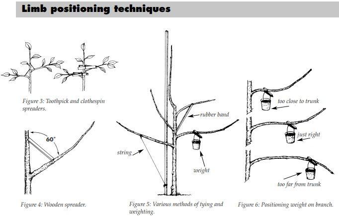 limb positioning techniques  pdf