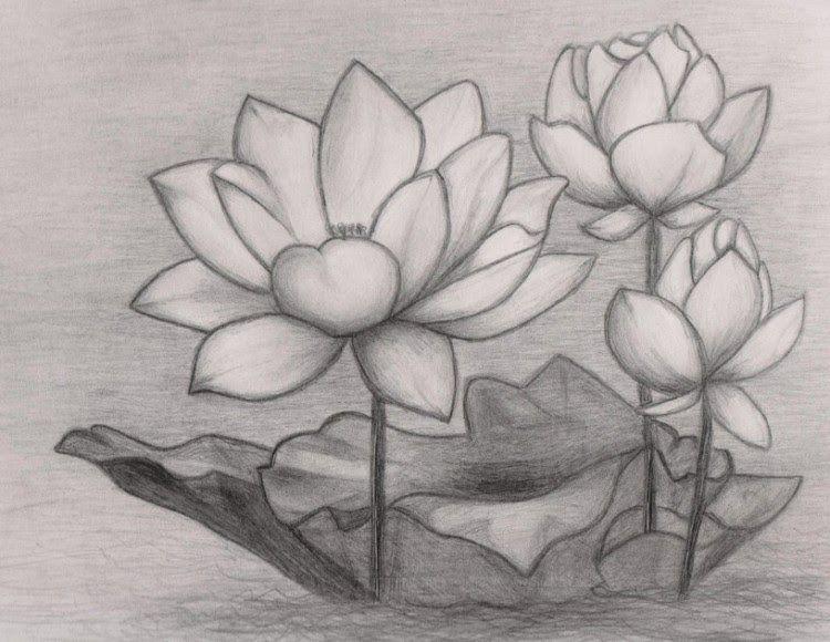 15 Contoh Gambar Ilustrasi Bunga Yang Mudah 39 Gambar Sketsa Bunga Indah Sakura Mawar Melati Download Contoh Gambar Ilustrasi Di 2020 Lukisan Bunga Lukisan Sketsa