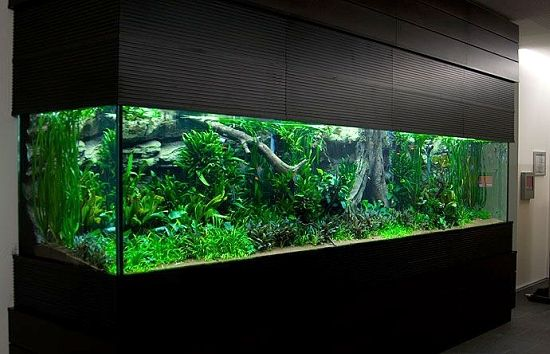 5500 Liter planted aquarium  Speechless  [Take the water out and you have an impressive
