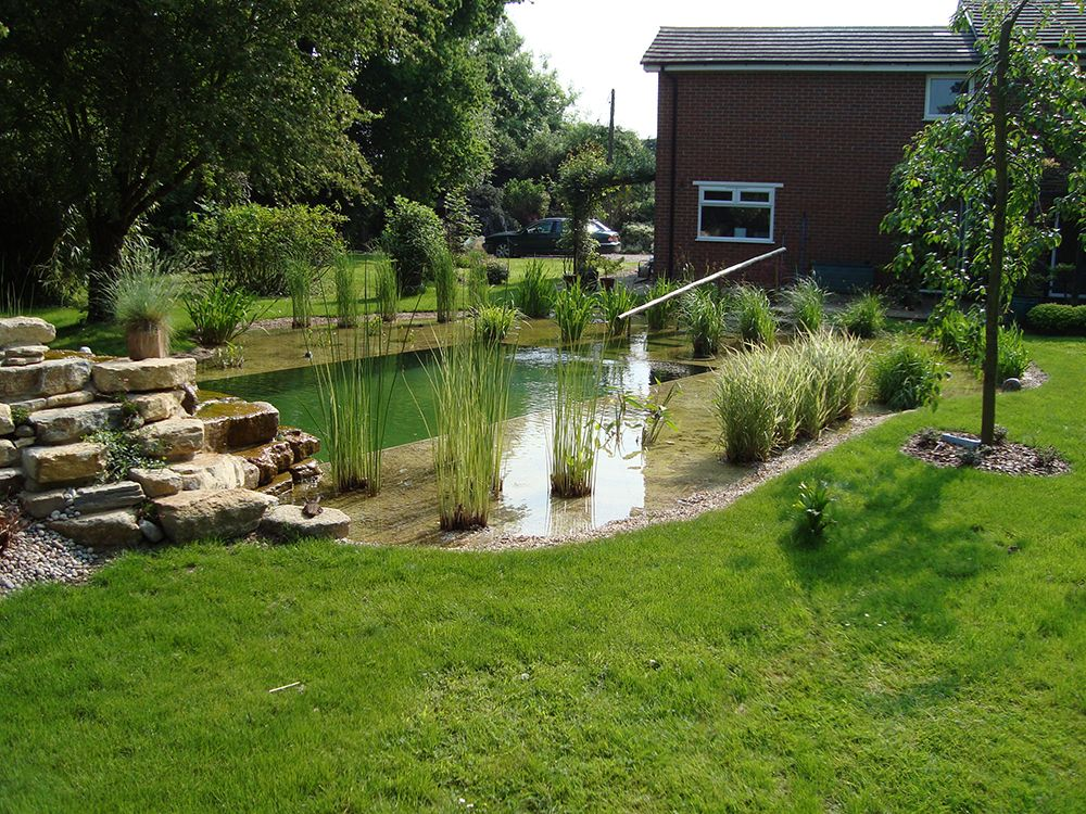 Natural swimming pools warwickshire swimming pond design for Natural garden pond design