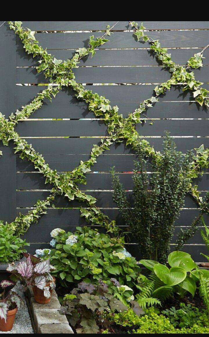 Climbing Plants Diy Garden Trellis