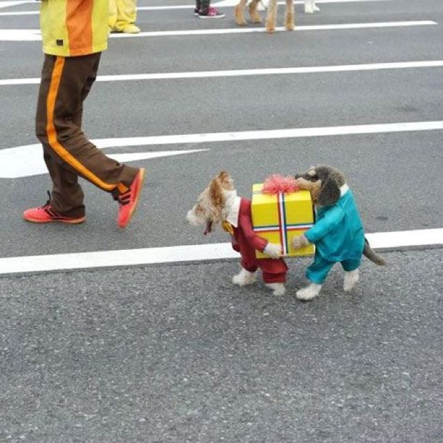 Best dog coat ever!