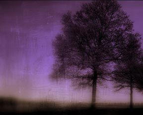 """The """"Ultra Violet"""" print by Linda Plaisted"""