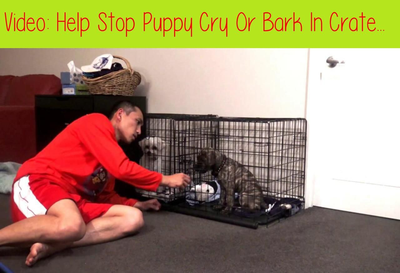 Help stop puppy cry or bark in crate at night puppy crate