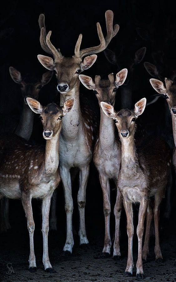 Beautiful Family Of Deer Standing Together Buck Doe And 3 Fawns