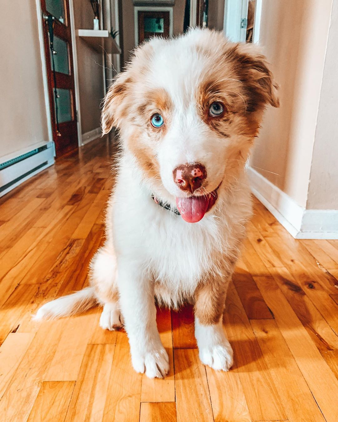 Dog And Baby Dog Projects Home Dog Dogs And Puppys Pet Dog Puppy Lovely Dog Cute Dog Cute Dog S Dog In 2020 Smiling Dogs Pet Dogs Puppies Dog Projects