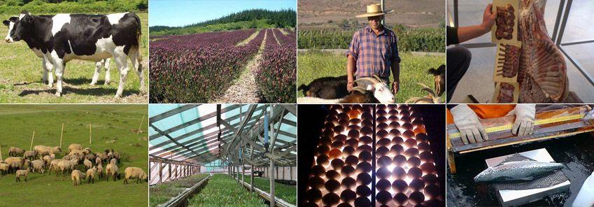 Innovación y estudios agropecuarios
